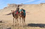 Camellos frente al Templo de los Nobles