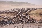 Emigración de ñus
