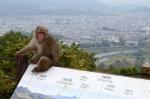 Macaco y Kioto