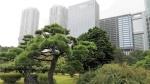 Lugares imprescindibles para visitar Tokio en otoño