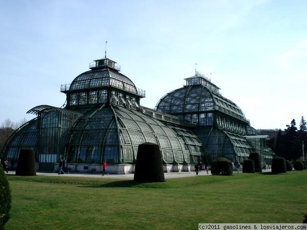 La casa de las palmeras del palacio de schonbrunn de viena - La casa de las palmeras ...