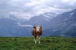Esencia suiza