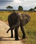 Día 6. Safari en PN Serengeti Central