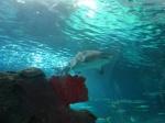 184_Toronto_Aquarium_tiburones_1