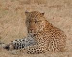 Enkewa Camp en pleno Mara-Kenia