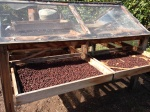 Gran Canaria - Coffee Plantation