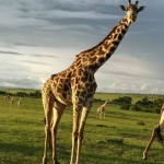 De ruta por Kenia
