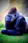 Bioparc Valencia. El nuevo zoo de la ciudad (Revisado).