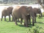 10 dias por la salvaje Kenia