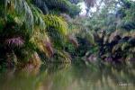 Costarica en 2 semanas (Bocas del toro)