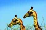 Segundo viaje a Sudáfrica, Mozambique y Swazilandia