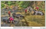 Maesa Elephant Camp (Chiang Mai)