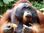 INDONESIA 2016 - 21 días entre orangutanes, templos y playas.