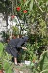 Agia Roumeli garden in Crete