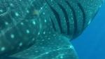 Avistamiento de Ballenas en Baja Califormia