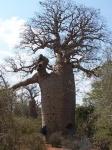 Costa este de Madagascar en 3 semanas