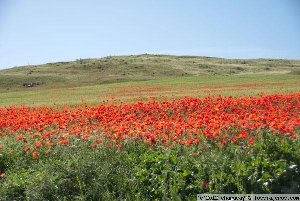 campos de amapolas en espana