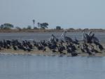 Observación de aves en Mar Lodj