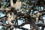 Safari Tanzania y relax en Zanzibar mayo 2014