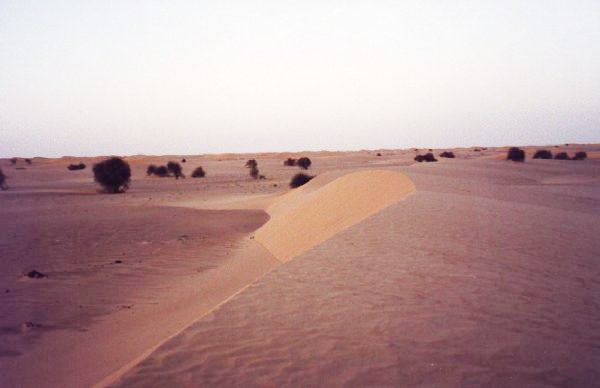 Dunes after sunset in Benichab. - Mauritania Desierto del Sahara en Benichab - Mauritania