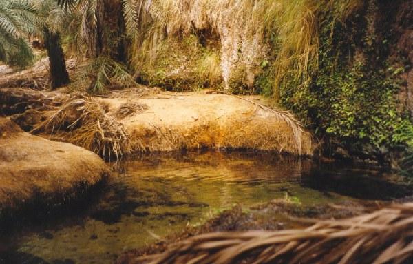Water in Terjit Oasis - Mauritania. Oasis de Terjit - Mauritania