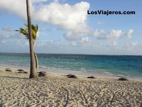 Coconut trees- Puntacana - Dominican Rep. Cocoteros - Puntacana - Dominicana Rep.