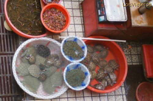 Tortugas en el mercado de alimentos - Chengdu - China
