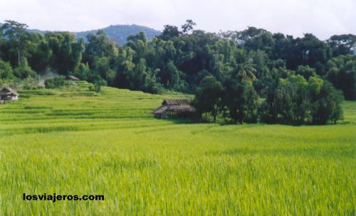 Landscape near Tat Kuang Si waterfalls. - Laos Paisajes de Laos
